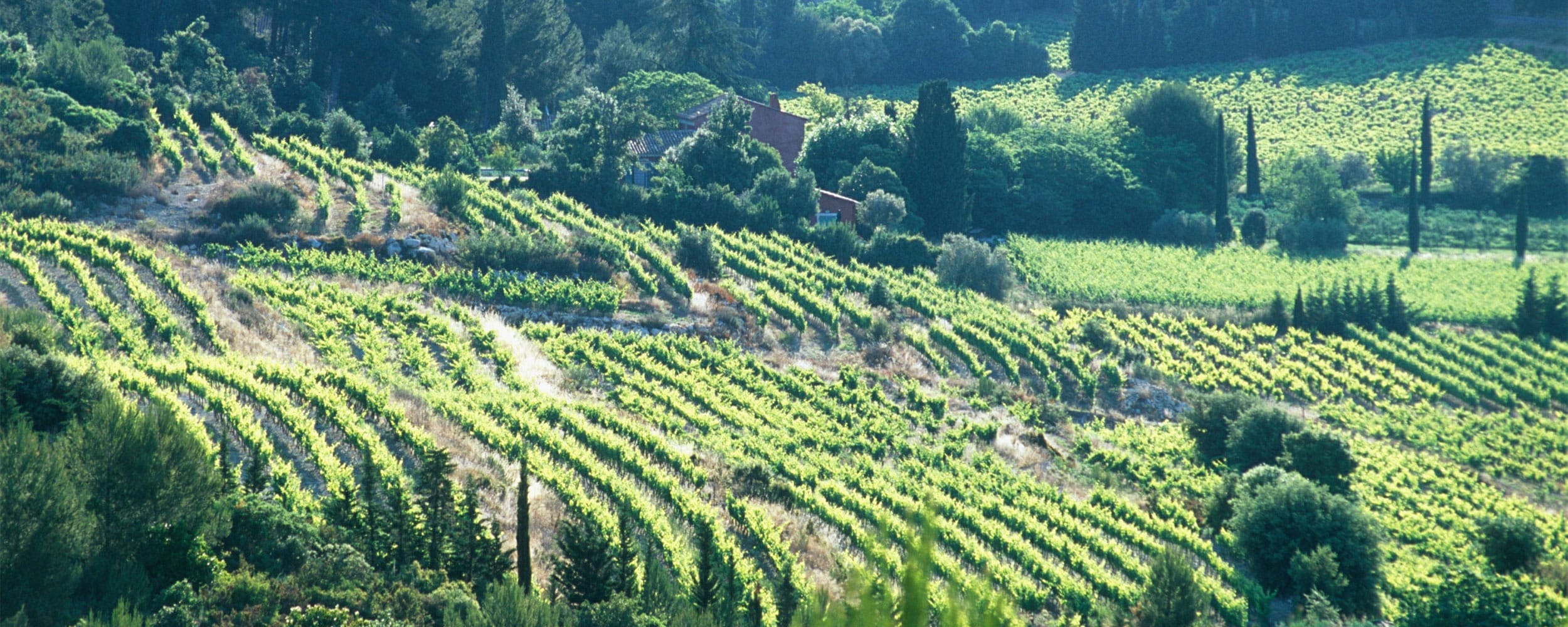 Private tours with Provence Wine Tours